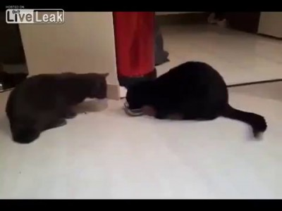 Котяры ..жадные котяры