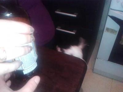 Пёс Кузя и пиво