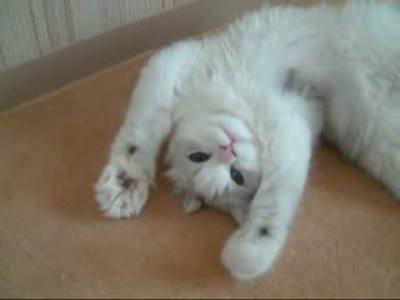 Кот, просто кот!