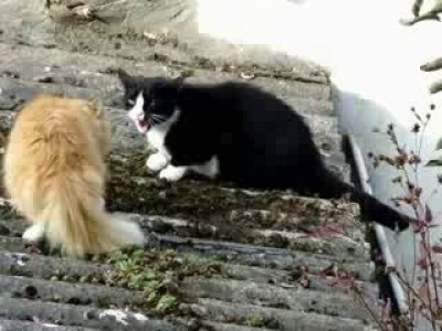 Сердитые коты. Angry cats talking