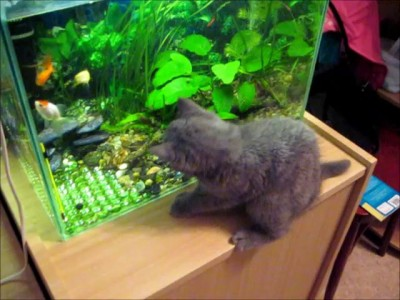Только ты - рыба моей мечты!