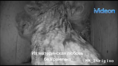 Прикольное видео про сов))