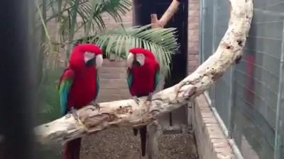 Попугаи танцуют под рэп