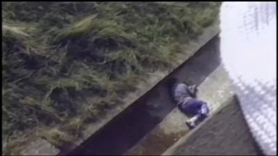 Ребенок упал в вольер с гориллами