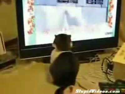 Загипнотизированный кот