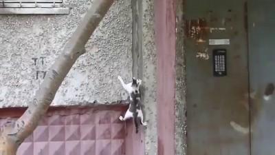 Кот ассасин/ Assassin cat