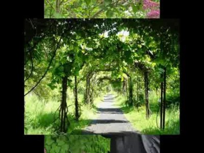 Прогулка по ботаническому саду. Калининград