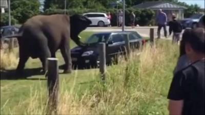 не зли слона