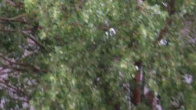Чудаки на матрасе) Одесса после дождя)
