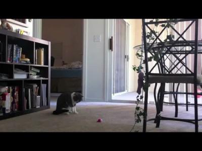 Кот и музыкальная игрушка