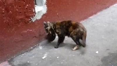 кот не может войти в нору