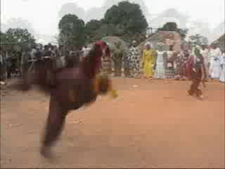 Африканские Триксеры