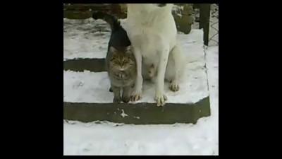 Милая котейка и застенчивый пес