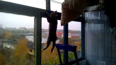 Кот-скалолаз
