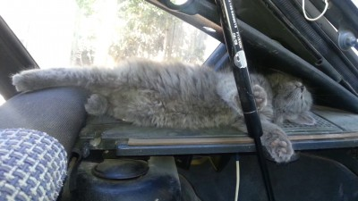 Клыбельная для кота