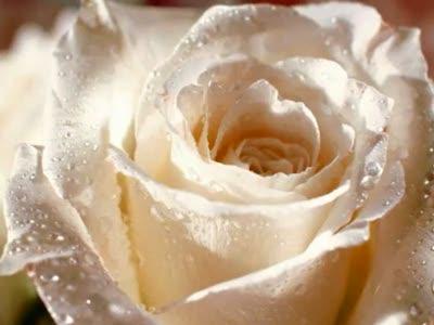 Букет из белых роз - В.Королёв и И.Круг