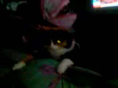 Адский кот