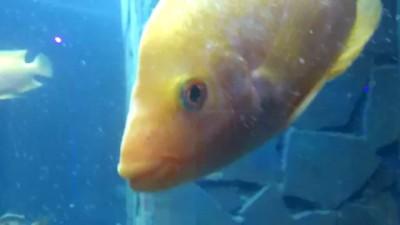 Рыбка-суперзвезда /fish superstar