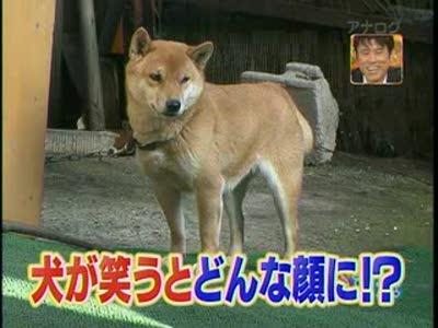 Очень довольный пёс