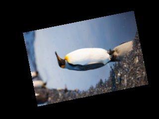 Пингвин2
