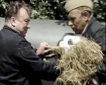 В бой идут одни старики - Сена маловато жрет много