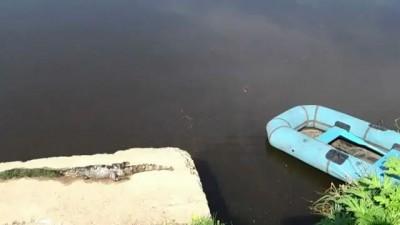 Крокодил на речке