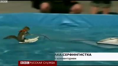 Белка-серфер