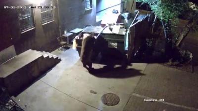Медведь ворует мусорный бак