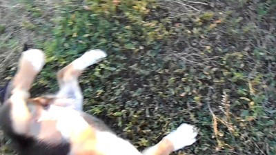 Нападения собаки