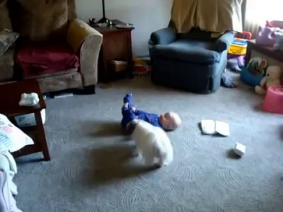Собака веселит малыша Baby