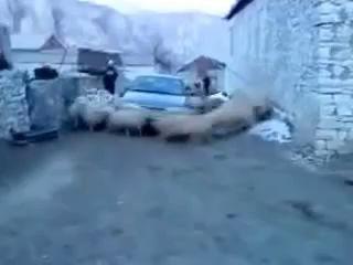Хоровод вокруг машины. Одним словом - Бараны ;)
