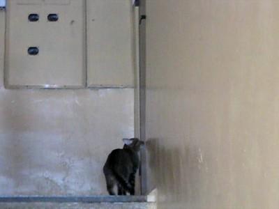 Марийский кот сам открывает дверь