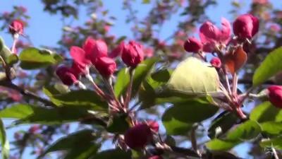 Елагин остров. Фестиваль тюльпанов (2013)