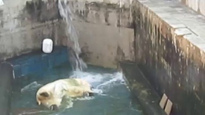 Новосибирский зоопарк. Каю дали воду