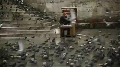 Царство голубей