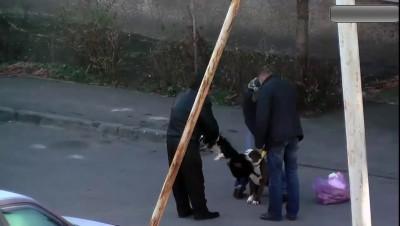 Нападение бойцовой собаки