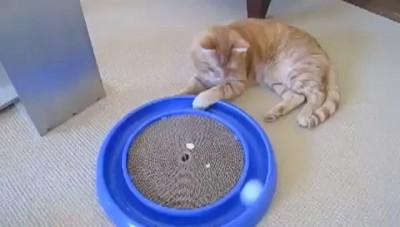 Чем занять кота