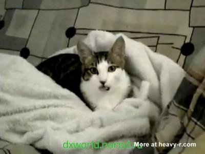 Поломанный кот