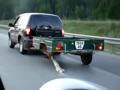 Tree trunk used as spare tire - Crazy!