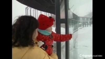 Панды радуются снегу