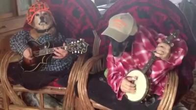 Собаки-гитаристы