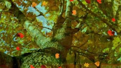 Осенние Листья!
