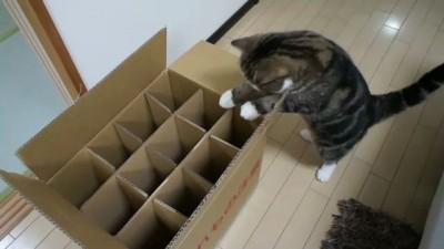 Неудача кота Мару
