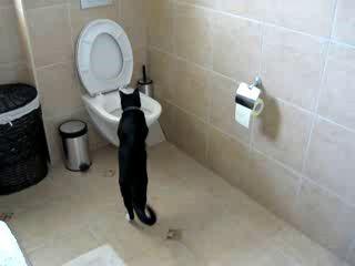 Умный кот :