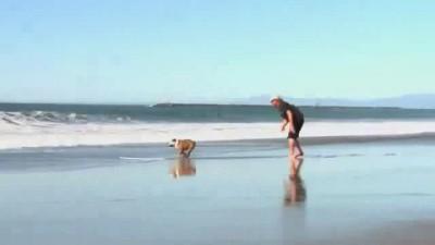 Универсальный собак