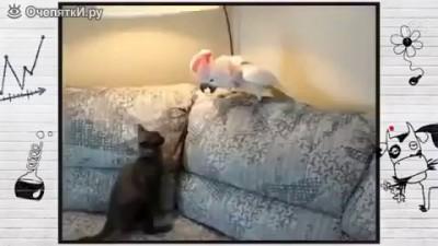 Попугай гопник и котик