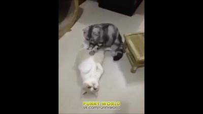 Кот - массажист