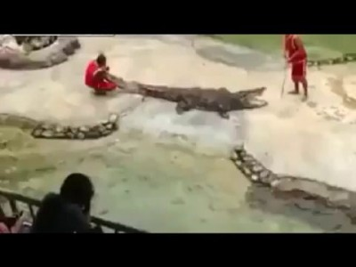 Крокодил укусил .