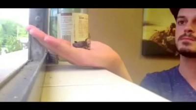 Мама - колибри кормит выпавшего из гнезда птенца .