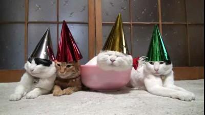 Коты и вечеринка